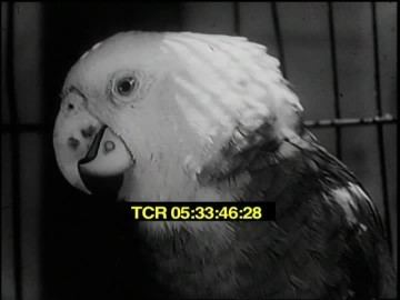 Down on the Farm (1941 film) Speaking of Animals Down On The Farm 1941 HD Stock Video 513