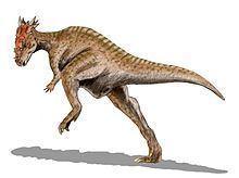 Dracorex httpsuploadwikimediaorgwikipediacommonsthu