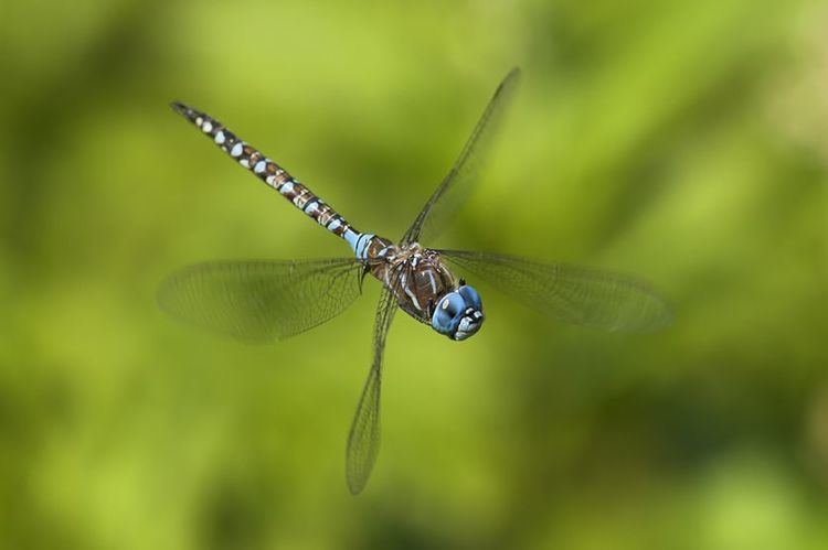 Dragonfly 7 things you never knew about dragonflies MNN Mother Nature Network