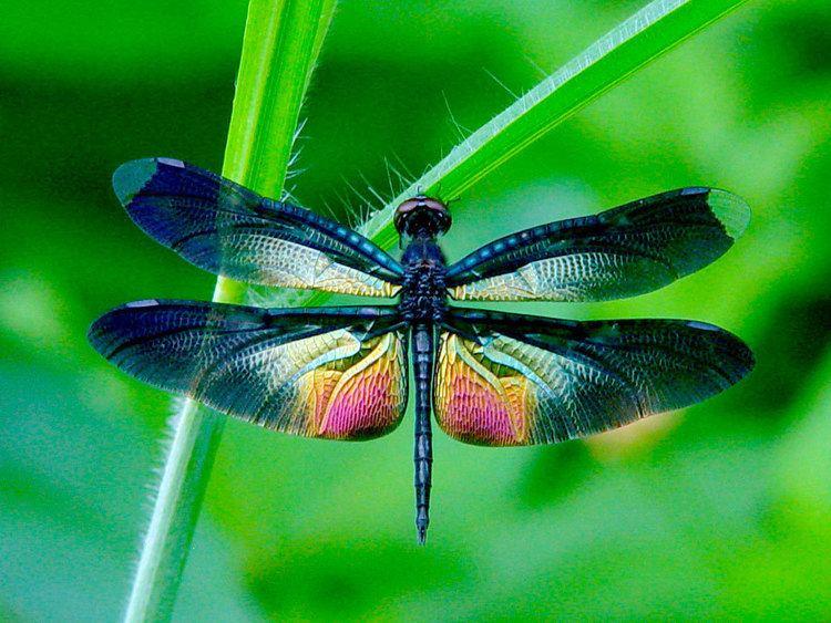 Dragonfly Dragonfly EzGro Garden