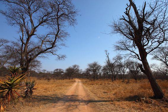 Dry season Dry season in the bush Matobo Hills VictoriaFalls24