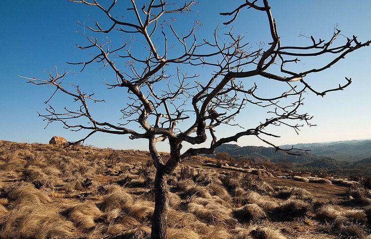 Dry season httpscloudfrontsafaribookingscomlibraryzimb