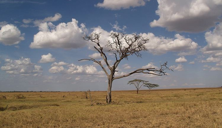 Dry season WHEN YOU GO THROUGH A SPIRITUAL DRY SEASON PAOLOPUNZALANCOM
