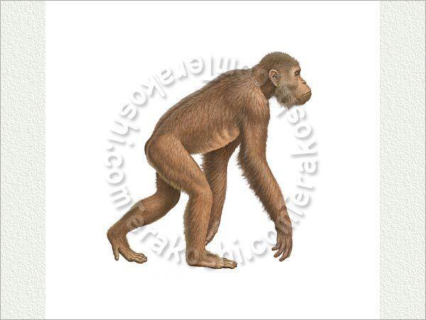 Dryopithecus Dryopithecus