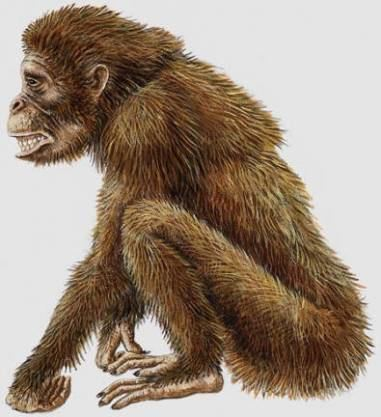 Dryopithecus Cryptomundo Dryopithecus Skunk Apes and Yeti