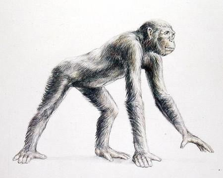 Dryopithecus Dryopithecus Africanus Anonymous as art print or hand painted oil