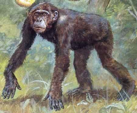 Dryopithecus wwwavphcombrjpgdryopithecusjpg