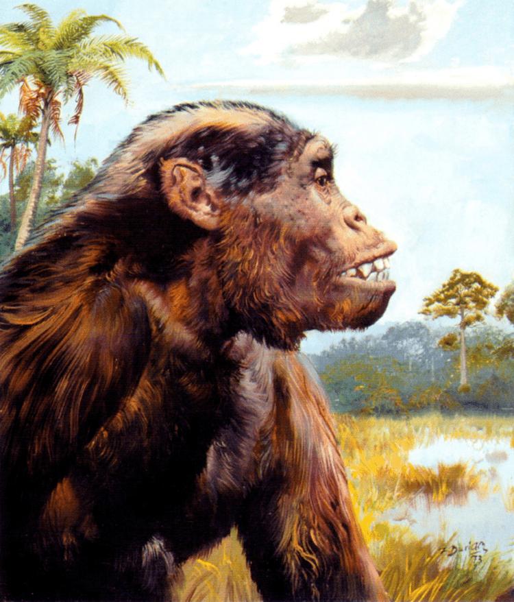 Dryopithecus Dryopithecus on emaze