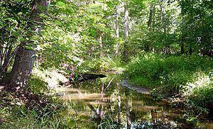 Dunes Creek httpsuploadwikimediaorgwikipediacommonsthu