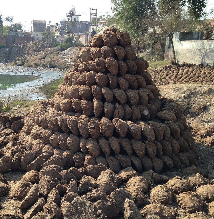 Dung cakes