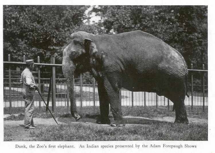 Dunk (elephant)