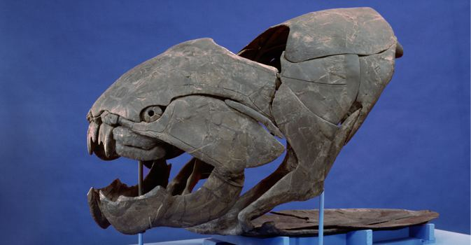 Dunkleosteus Dunkleosteus terrelli Cleveland Museum of Natural History