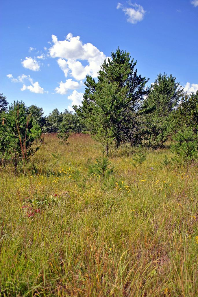 Dunnville Barrens State Natural Area