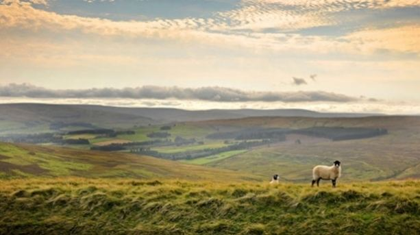 Durham Dales Savour a tasty foodie trail in the Durham Dales VisitEngland