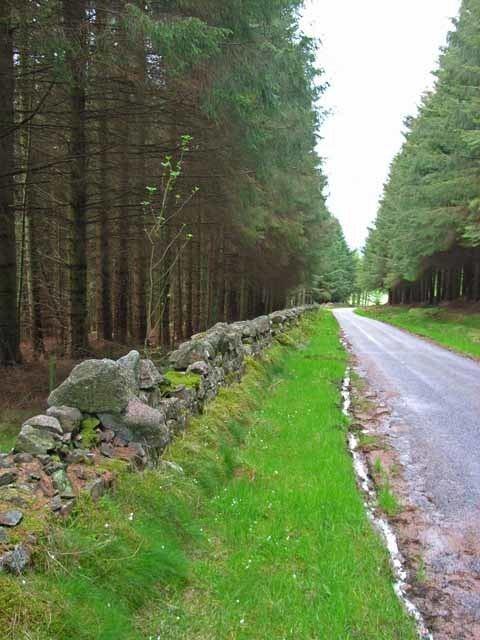 Durris Forest