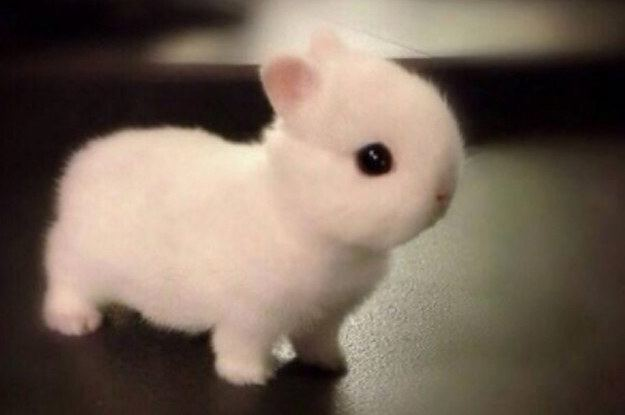 Dwarf rabbit Literally Just 21 Super Cute Pictures Of Dwarf Bunnies That39ll Make