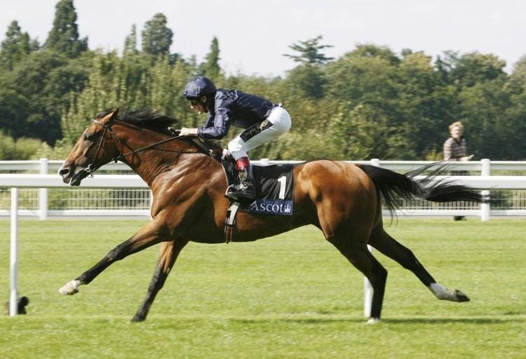Dylan Thomas (horse) HRI Horse Profile