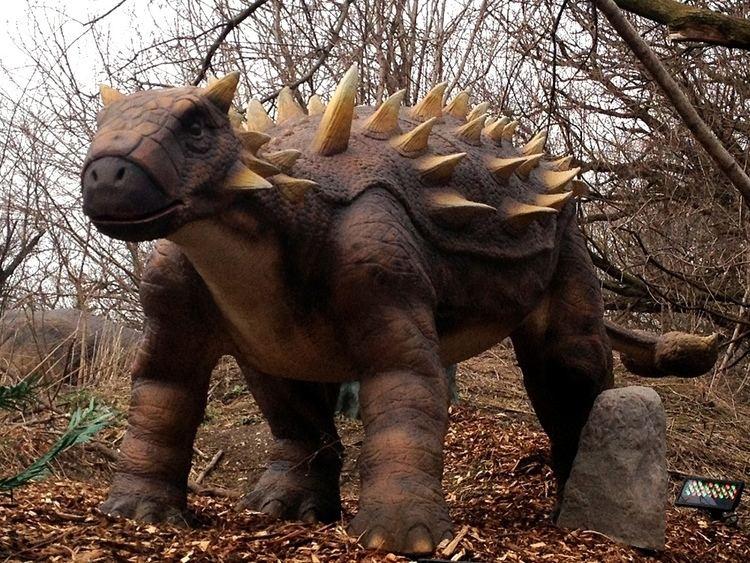 Dyoplosaurus Dinosaur Dyoplosaurus Information for Kids