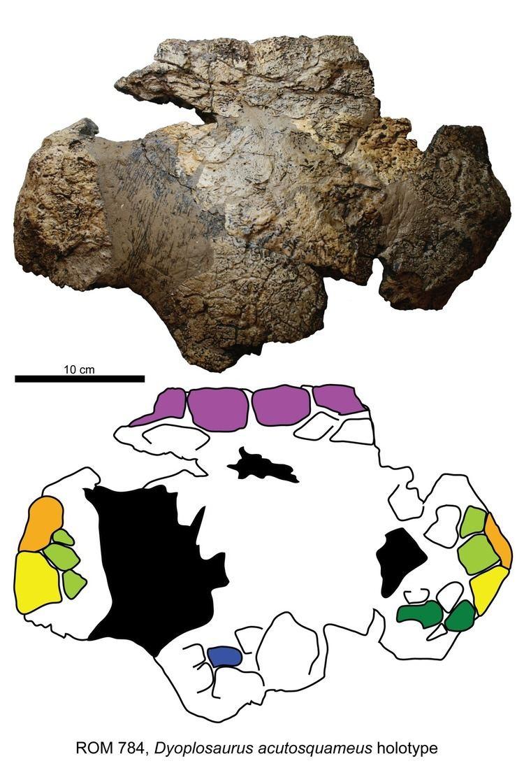 Dyoplosaurus Dyoplosaurus Wikipedia