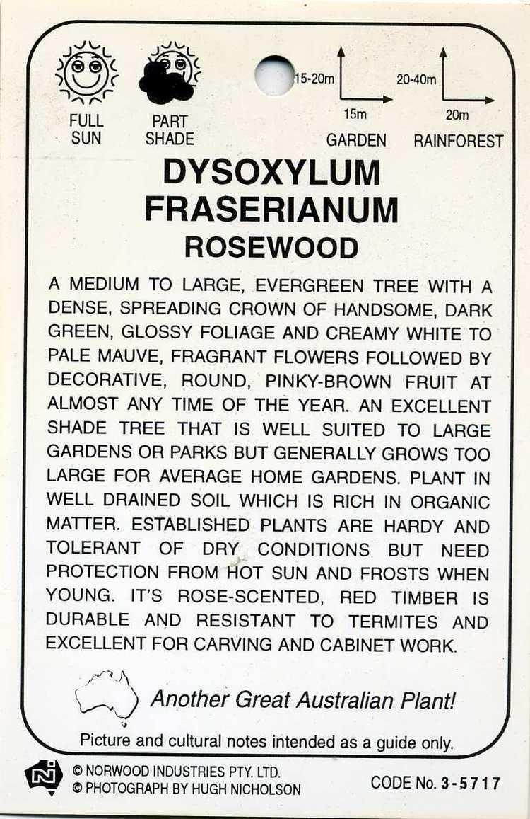 Dysoxylum fraserianum Rosewood Dysoxylum Fraserianum