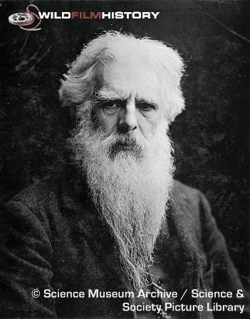 Eadweard Muybridge WildFilmHistory Eadweard Muybridge