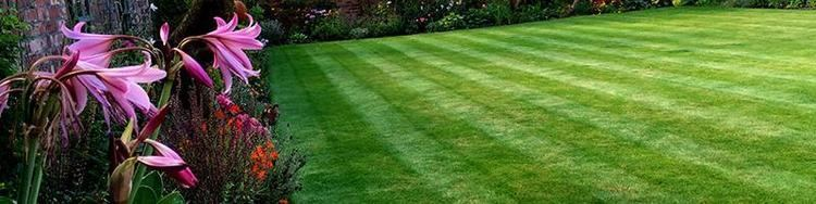 Early Summer Early Summer Treatment Lawn Treatments GreenThumb Lawn Treatment