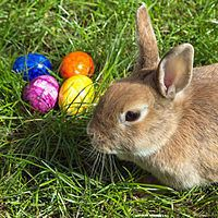 Easter Bunny httpsuploadwikimediaorgwikipediacommonsthu