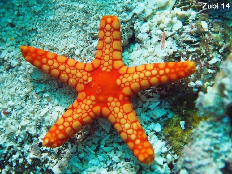 Small aquatic organisms, such as coral, are the producers of the...