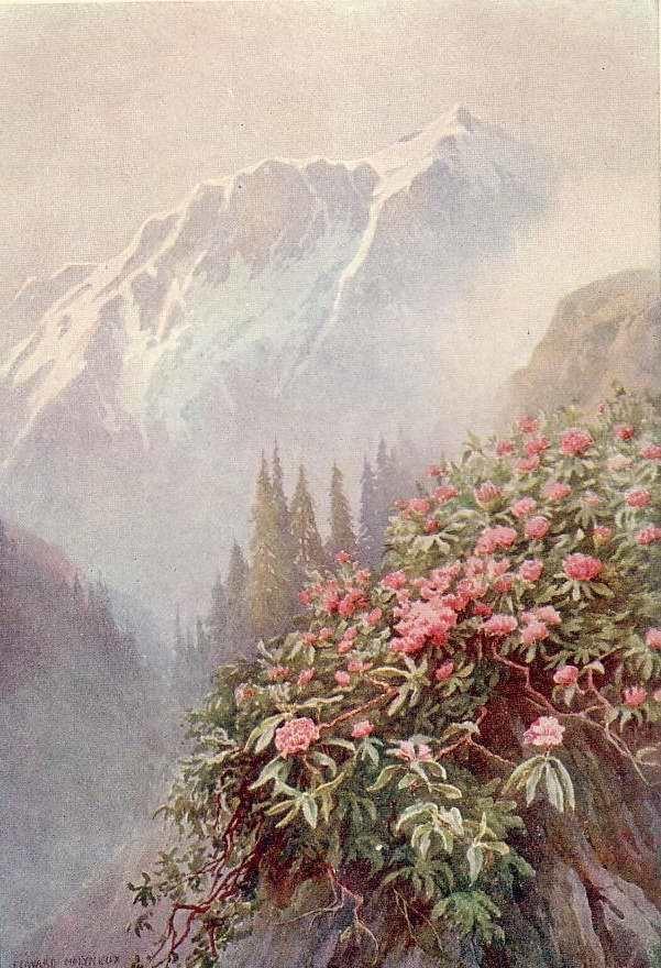 Edward Mary Joseph Molyneux
