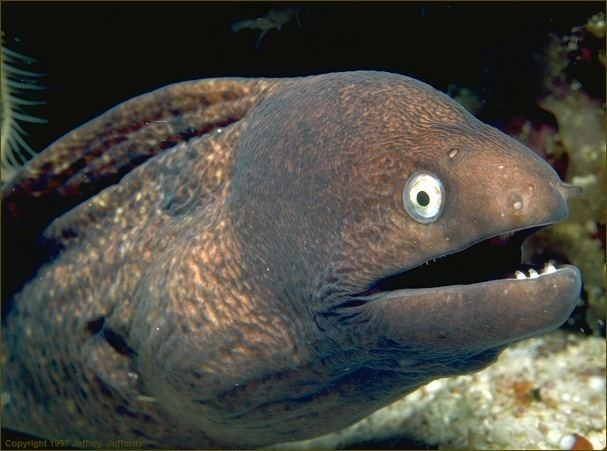 Eel eel swimming upside down Tropical Fish Forums at the Age of