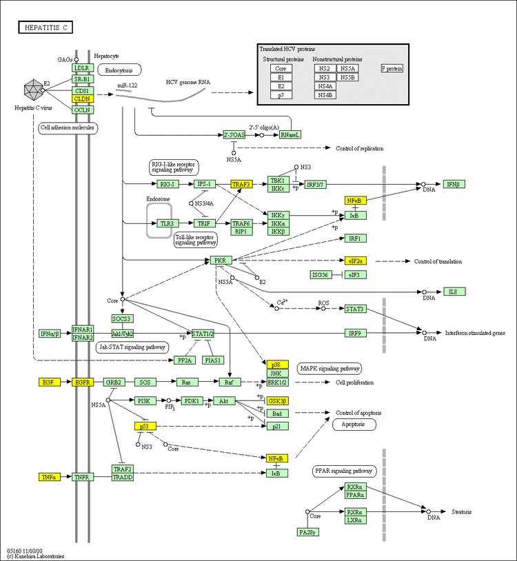 EIF2S1 Schizophrenia pathways