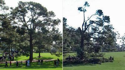 Eisenhower Tree Augusta National39s Eisenhower Tree Damaged Removed After Ice Storm