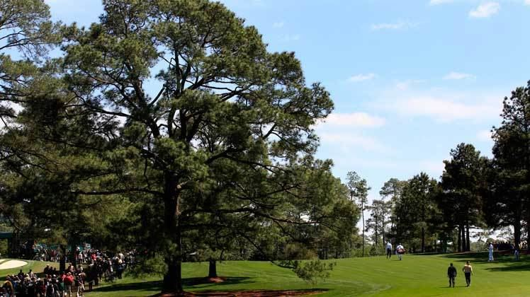 Eisenhower Tree Augusta National39s Eisenhower Tree Removed 39Difficult To Accept
