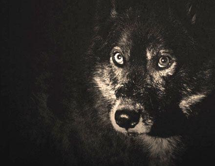 El Aura SIFFBlog Bowie Eyed Dog El Aura