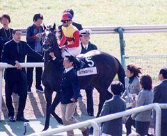 El Condor Pasa (horse) httpsuploadwikimediaorgwikipediacommonsthu