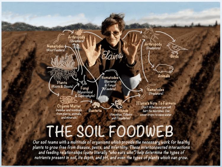 Elaine Ingham Understanding the Soil Food Web with Dr Elaine Ingham