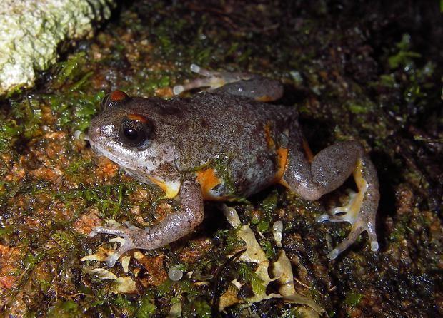 Elegant frog cbsnews1cbsistaticcomhubir2014121266e95ed