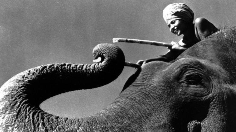 Elephant Boy (film) The Elephant Boy From Mysore who Became an International Superstar