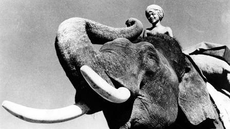 Elephant Boy (film) Elephant Boy 1937 The Criterion Collection