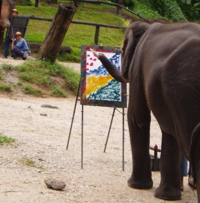 Elephant cognition