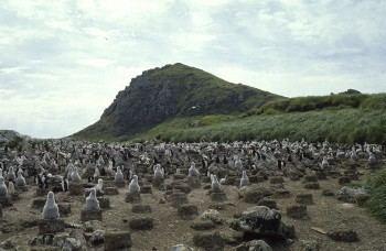 Elephant Jason Island httpswwwacapaqimagesstoriesacapIslandsEl