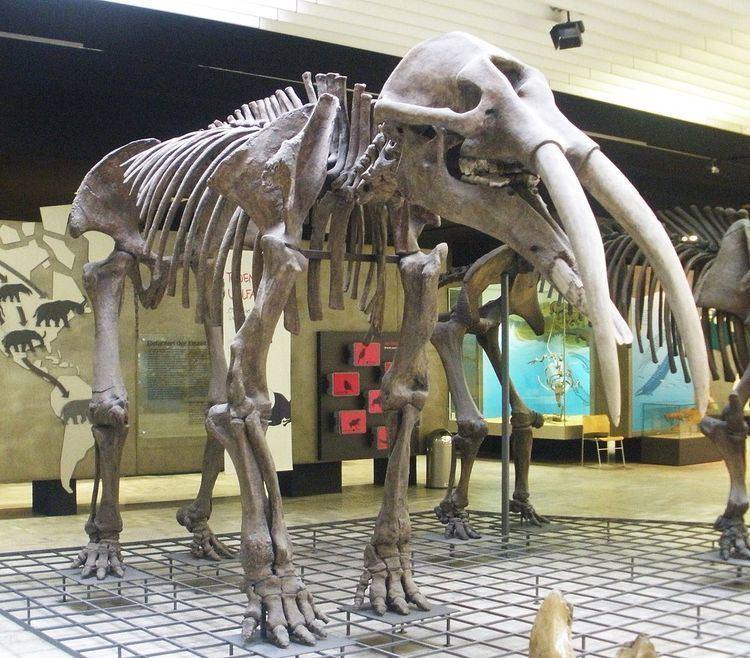 Elephantida