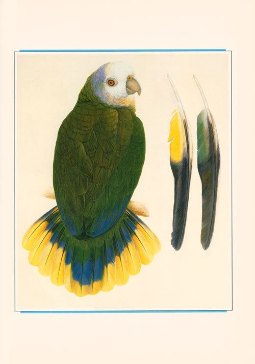 Elizabeth Butterworth Parrots macaws and cockatoos the art of Elizabeth Butterworth