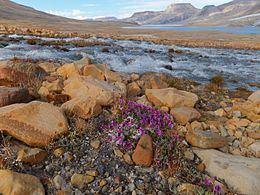 Ellesmere Island httpsuploadwikimediaorgwikipediacommonsthu