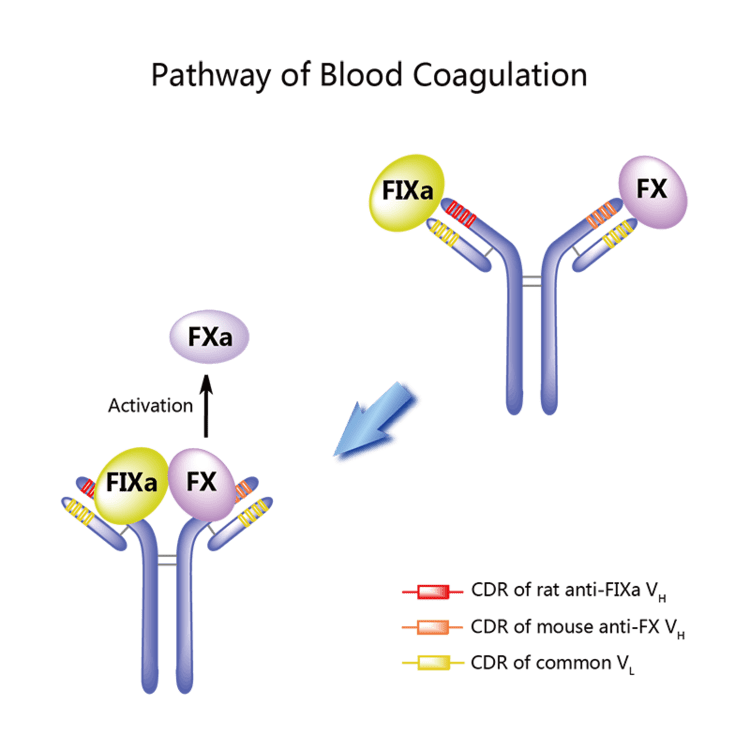 Emicizumab 182922305082drugbiologyPB0288AEC910struct