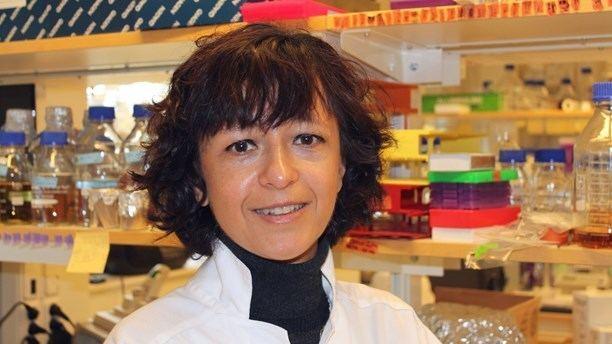 Emmanuelle Charpentier Molecular knifequot sharpened at Ume uni Radio Sweden