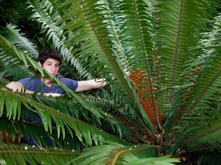 Encephalartos paucidentatus Encephalartos paucidentatus Plants Encephalartos Species