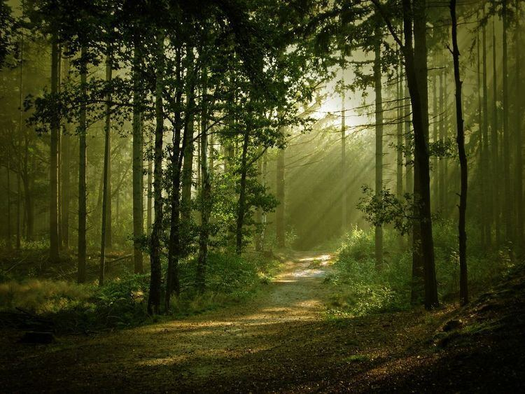 Enchanted forest httpssmediacacheak0pinimgcomoriginals47