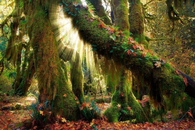 Enchanted forest enchanted images
