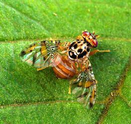 Endopterygota Endopterygota
